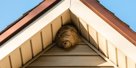 General Pest Control Company on How Wasps Can Damage Your Home, Greece, New York