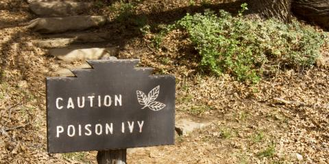 When to See a Pediatrician for Poison Ivy, Sweden, New York