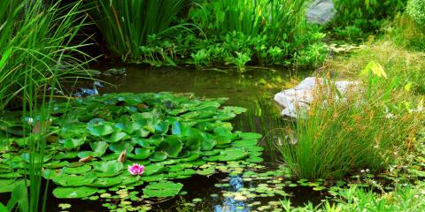 3 Reasons You Should Be Using Pond Colorants to Control Algae Growth, East Bloomfield, New York