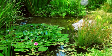 3 Ways to Prepare Your Pond for Winter, East Bloomfield, New York