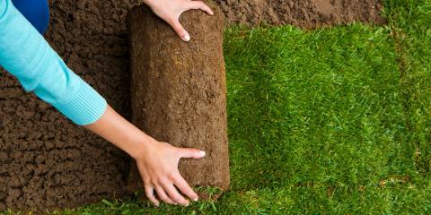 3 Reasons to Install Zoysia Sod on Your Lawn, O'Fallon, Missouri