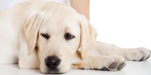5 Signs You Should Take Your Pet to an Animal Hospital, O'Fallon, Missouri