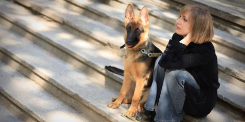 What Is Pet Orthopedic Surgery?, O'Fallon, Missouri