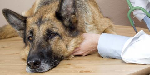 3 Subtle Signs Your Dog Is Sick, O'Fallon, Missouri