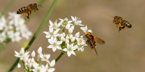 The Differences Between Bees & Wasps, Koolaupoko, Hawaii
