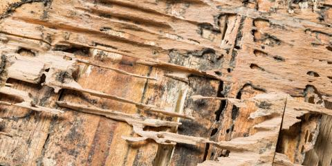 The Differences Between Drywood & Dampwood Termites, Koolaupoko, Hawaii