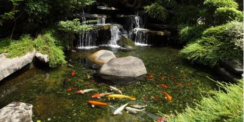 3 Common Koi Pond Myths, Waikane, Hawaii