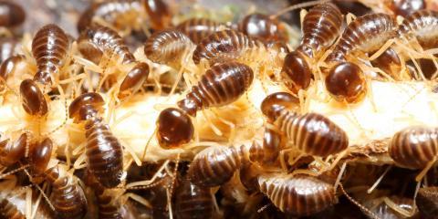 How Long Do Termites Live? Get the Facts From Hawaii's Best Pest Exterminators, Pahoa-Kalapana, Hawaii