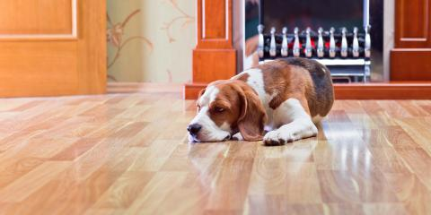 What Are the Best Flooring Options for Pets?, North Whidbey Island, Washington
