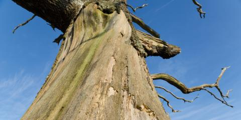 5 Signs of Tree Damage & Disease, Oak Ridge, North Carolina
