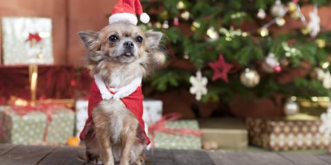 5 Factors to Consider Before Adopting a Puppy This Christmas, Defiance, Missouri