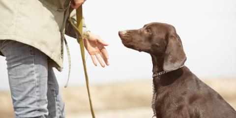 3 Basic Dog Obedience Training Tips, Defiance, Missouri