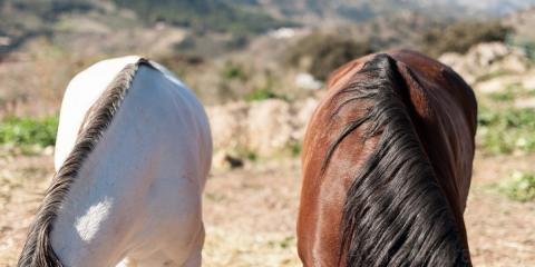 What Is a Horse Rehab Facility & What Can They Do For My Horse?, Oceanside-Escondido, California