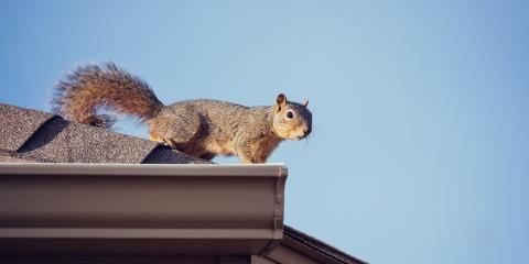 October is National Squirrel Awareness Month, Kingman, Arizona