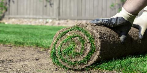 Top 5 Differences Between Sodding & Seeding, O'Fallon, Missouri