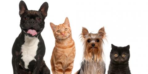 O'Fallon's Top Veterinarians Answer FAQs About Dog & Cat Ownership, O'Fallon, Missouri