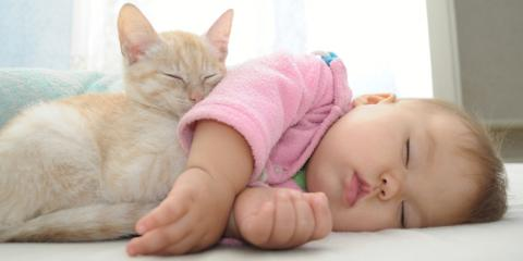 5 Effective Ways to Introduce Your Cat to the New Baby, O'Fallon, Missouri