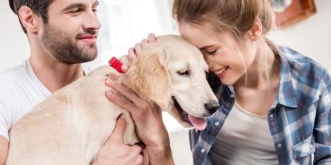 Protecting Your Dog Against Parvo With Pet Vaccinations, O'Fallon, Missouri