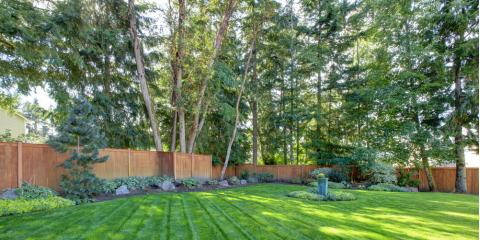 5 Landscaping Company-Approved Tips to Keep Your Trees Healthy, O'Fallon, Missouri