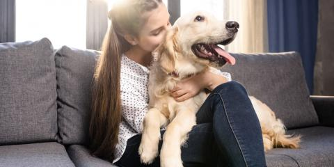 4 Types of Dogs That Could Use In-Home Pet Services, Alexandria, Virginia