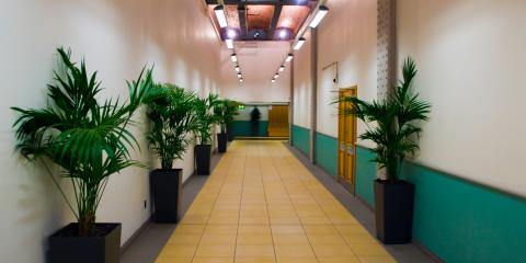 How Your Office Space Benefits From Plants, Lexington-Fayette, Kentucky