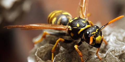 3 Reasons to Call the Professionals for Wasps, Yellow Jackets, & Hornets, Amelia, Ohio