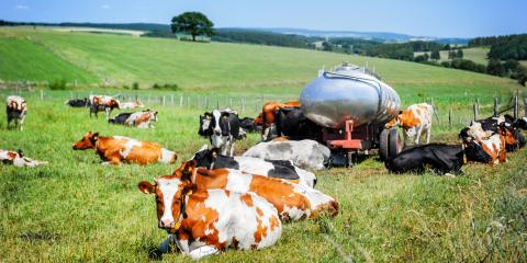 3 Tips to Keep Cows Cool in the Summer, Bethel, Ohio