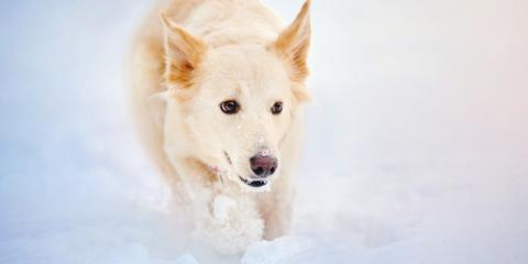 3 Ways to Keep Your Dog Active During the Winter, Fairfield, Ohio