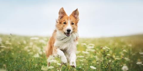 Fairfield Veterinarian Lists 3 Dog Safety Tips for Warm Weather, Fairfield, Ohio