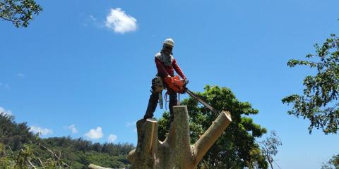 3 Types of Equipment Used in Tree Clearing , Ewa, Hawaii