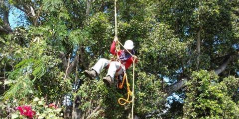 How Tree Trimming Protects You & Your Neighbors, Honolulu, Hawaii