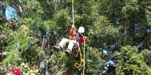 Why Ohana Tree Services Should Be Your Company of Choice, Honolulu, Hawaii