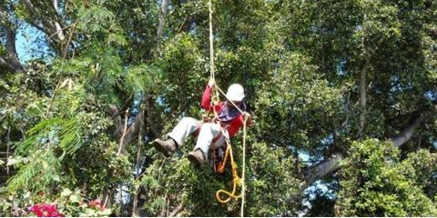 The Difference Between Tree Trimming & Pruning , Ewa, Hawaii