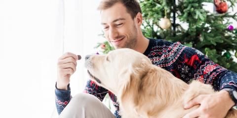 5 Holiday Treats You Shouldn't Give Your Dog, Honolulu, Hawaii