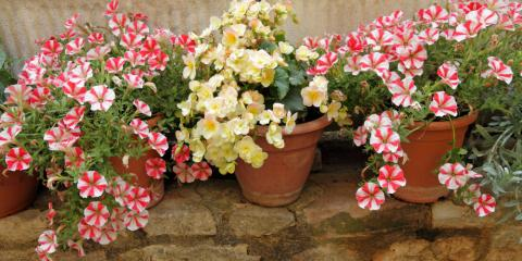 Tips for Successfully Growing Flowers in a Container Garden, Quaker City, Ohio