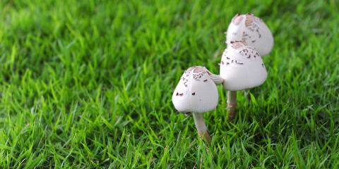 Why Are There Mushrooms Growing In Your Lawn?, Johnstown, Ohio