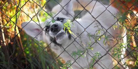 What to Know About Ohio's Dangerous Dog Laws , Avon, Ohio