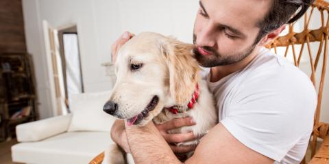 Everything You Need to Know About Seasonal Pet Allergies, Sharonville, Ohio