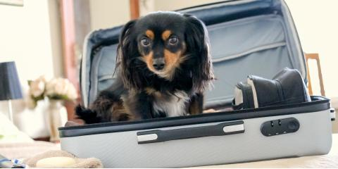 How to Emotionally Prepare a Dog Before Traveling Without Them, Miami, Ohio