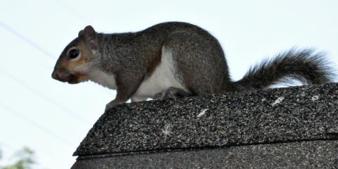 Got a Squirrel in the Attic? How Critter Removal Pros Get Them Out, Miami, Ohio