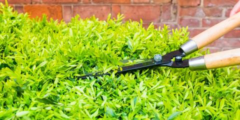 The Do's & Don'ts for Pruning Shrubs, Hamilton, Ohio