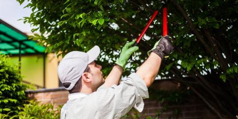 5 Benefits of Spring Tree Trimming, Miamitown, Ohio