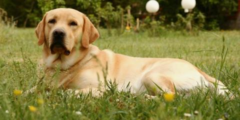 A Guide to Seasonal Allergies in Pets, Middlefield, Ohio