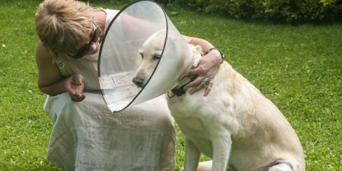 4 Tips for Helping Your Pet Adjust to an Elizabethan Collar, Buckeye Lake, Ohio