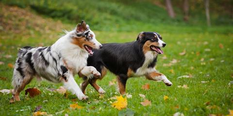 Fairfield Veterinary Clinic on 3 Ways to Prepare Pets for Boarding, Fairfield, Ohio