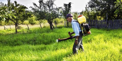 Pest Control: DIY or Professional?, Maui County, Hawaii