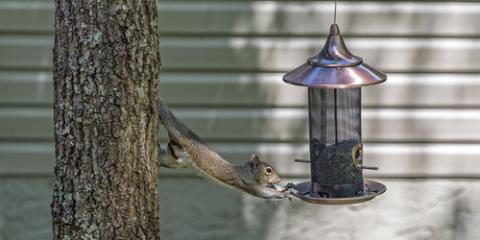 3 Ways to Prevent Squirrels From Attacking Your Bird Feeder, Olympia, Washington