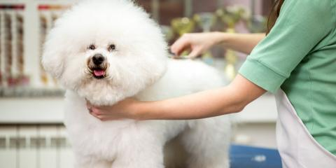 5 Dog Breeds That Require the Most Grooming, Omaha, Nebraska
