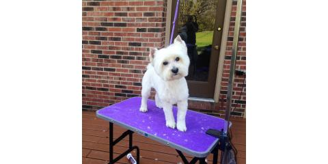On the Spot In Home Pet Grooming, Pet Grooming, Services, Hamilton, Ohio
