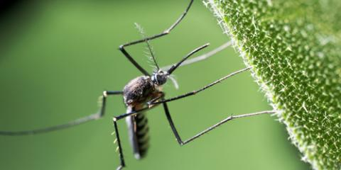 Why Schedule a Mosquito Control Appointment This Spring?, Smithville, Tennessee